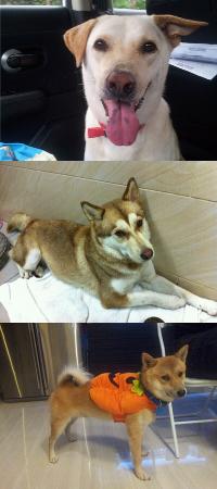 Cecilia, Max, 萊萊and褔褔