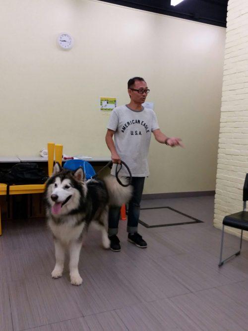 犬隻行為及訓練證書課程 - 青協持續進修課程